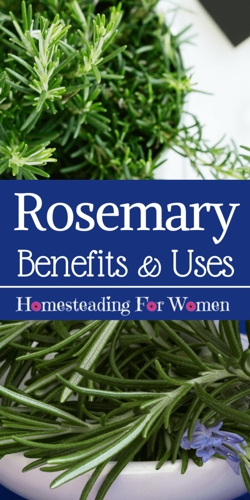 Rosemary Herb Health Benefits