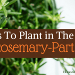 Herbs To Plant In The Fall -Part 1 Rosemary