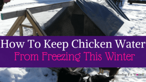 A Foolproof Way To Keep Chicken Water From Freezing This Winter