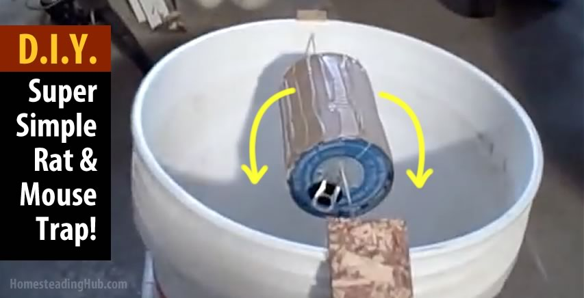 A Super Simple To Make 5 Gal Bucket Rat Or Mouse Trap