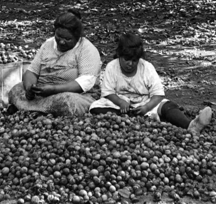 158 Walnuts Shelling And Picking Walnuts By Hand El Monte Calif