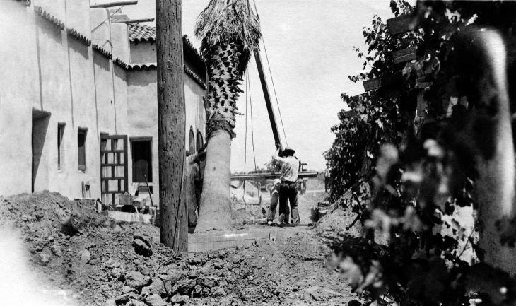 Planting Palm Tree East Side Of La Casa Nueva 99.5.32.681