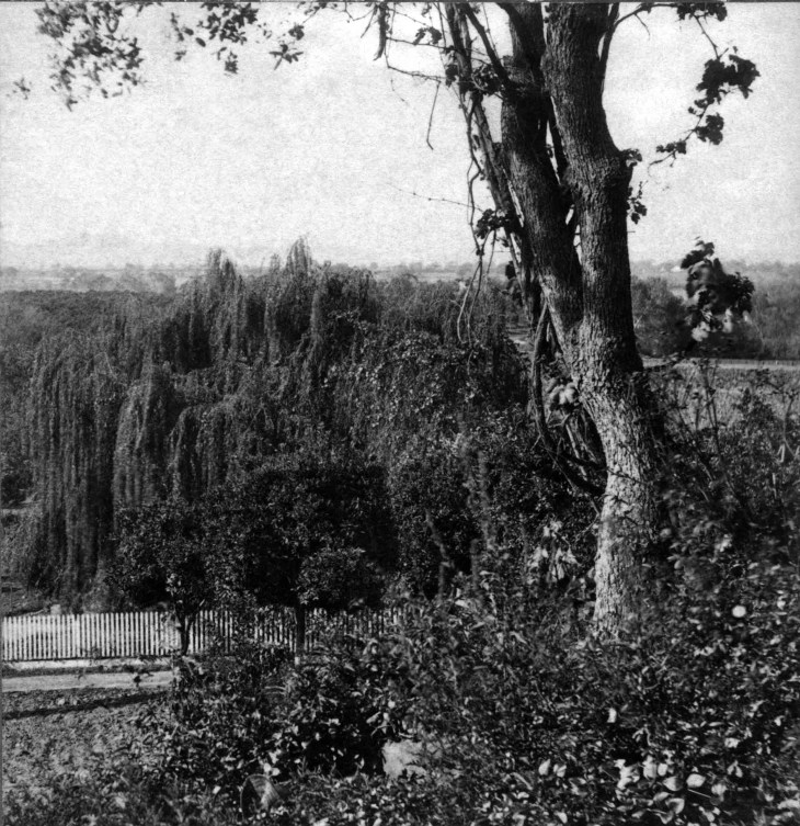 SV View From Lake Vineyard BD Wilsons San Gabriel 4420 2013.816.