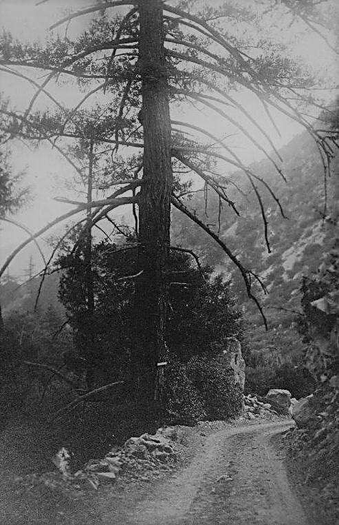 Mt Wilson toll road 1910s