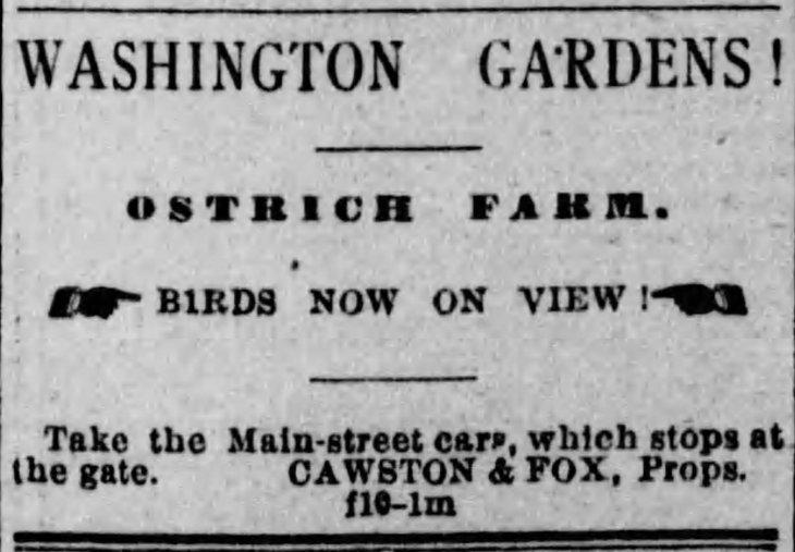 Cawston and Fox Washington Gardens Ostrich Farm Herald_Feb_10__1887_