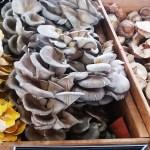 Harrisonburg's Farmer's Markets