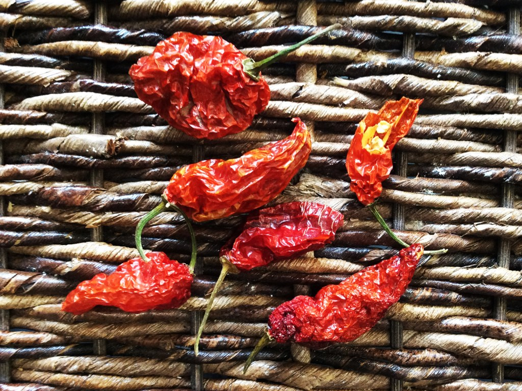Ryan's homegrown ghost chilies.