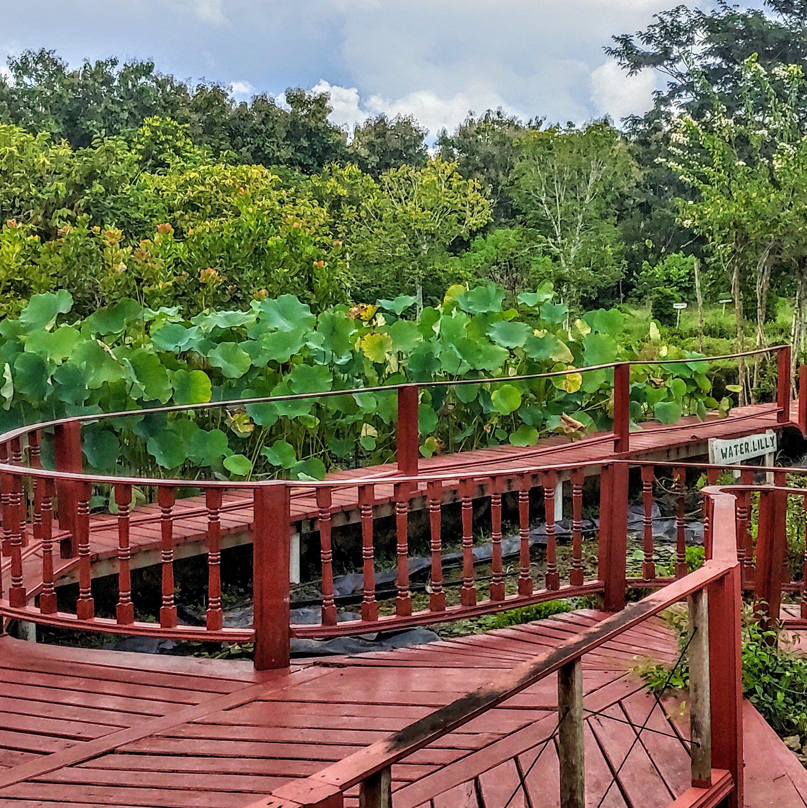 Bridge over Waterlillies