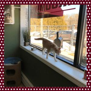 Window Cat