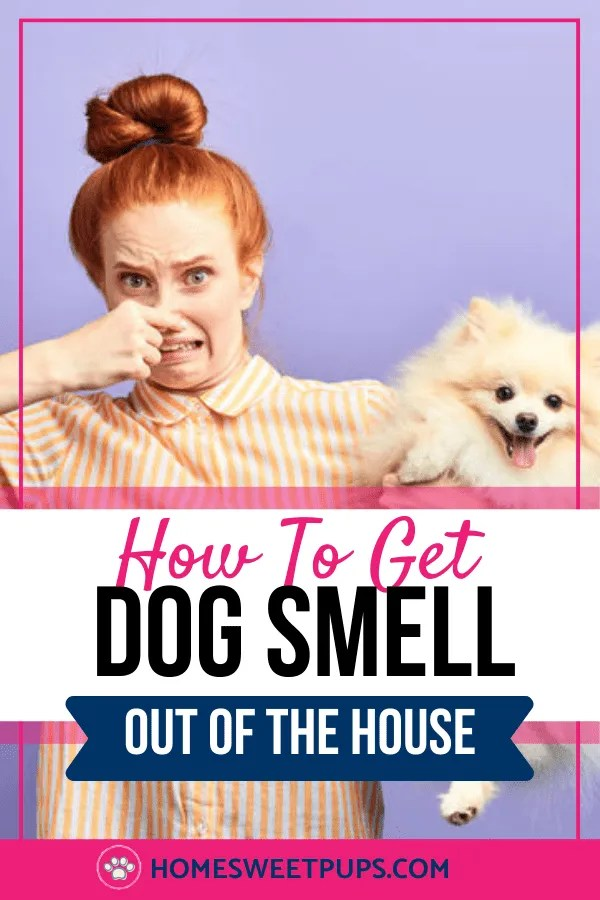 how to eliminate dog odor in your home tips on cleaning and what tools to use in the home to help with the odor.