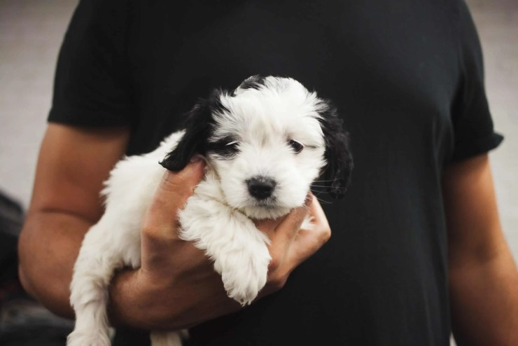Bring Home a puppy for the first time