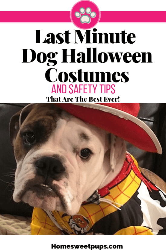 Last Minute Dog Halloween Costumes and Safety Tips. Ideas where to buy quickly or handmade ones in a jiffy