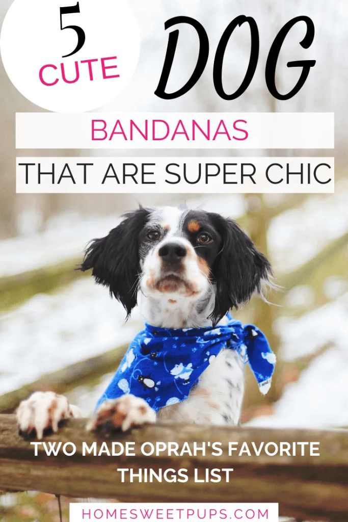 dog wearing cute dog bandana that are super chic