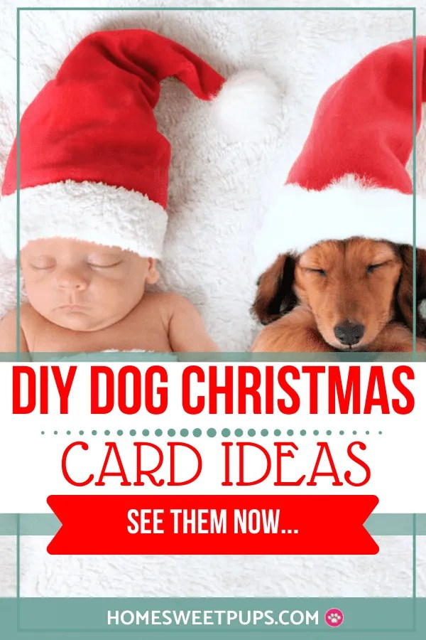 DIY DOG CHRISTMAS CARD IDEAS FOR THAT PERFECT PHOTO SESSION