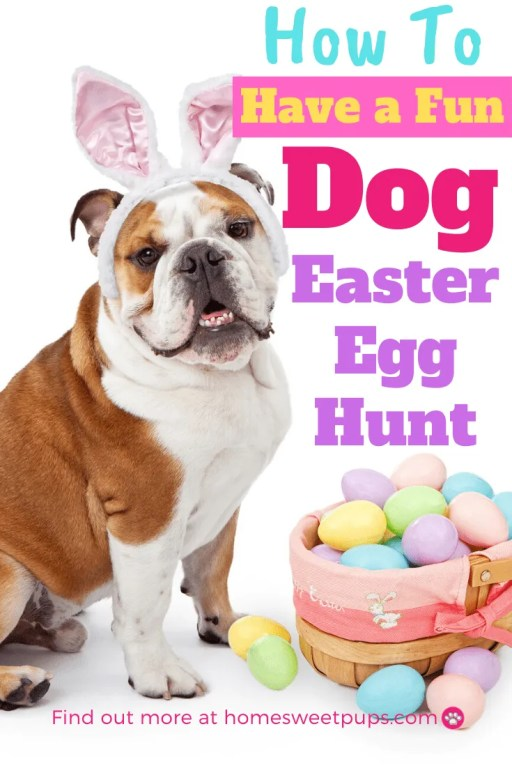 how to have a dog easter egg hunt