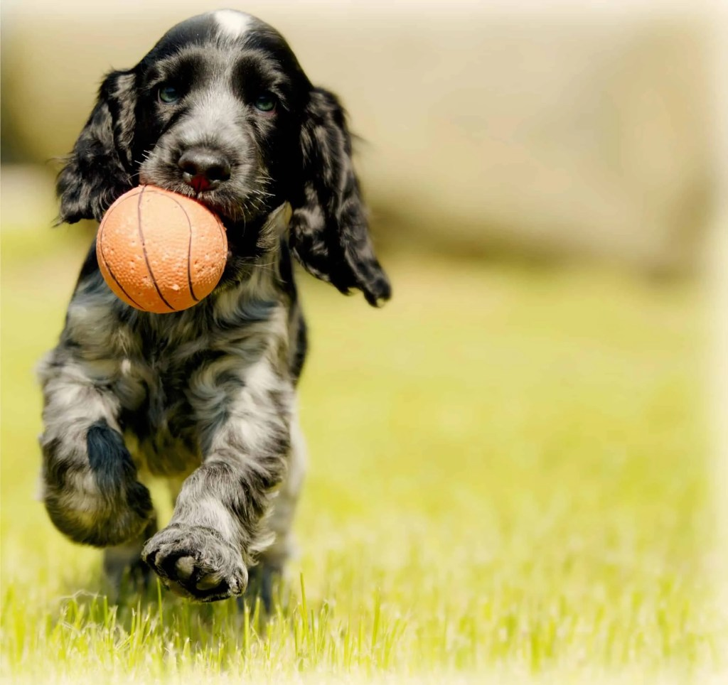 dog outside with ball in mouth