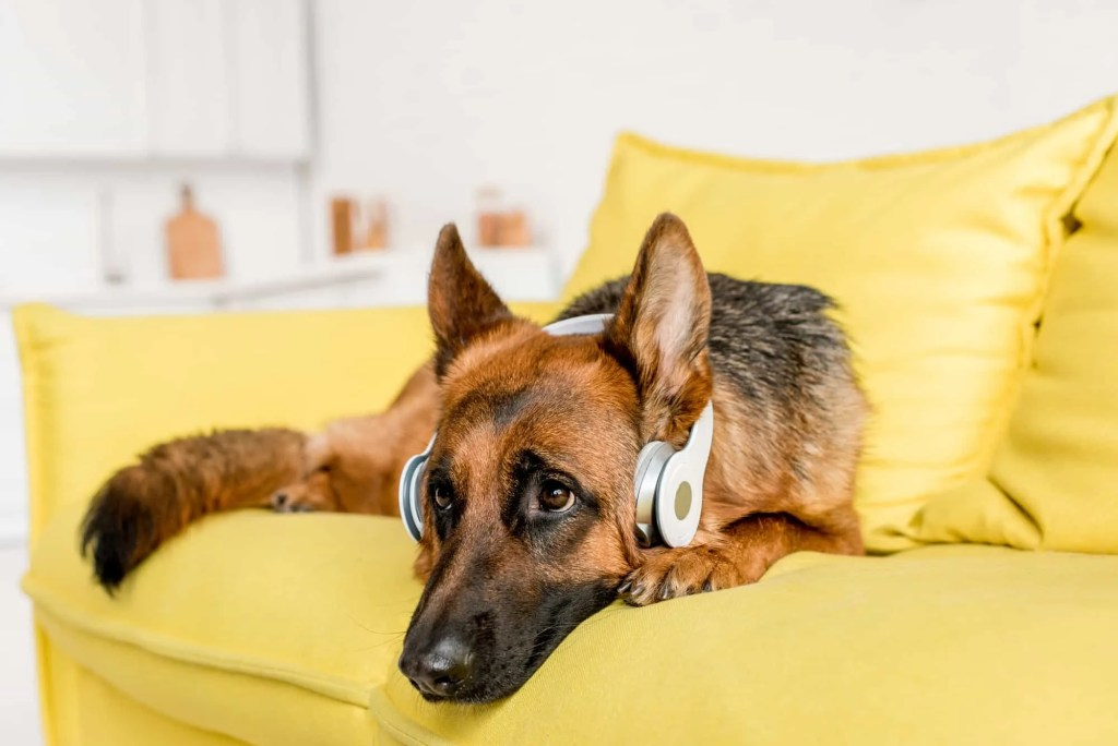 dog on couch with head phones listening to music