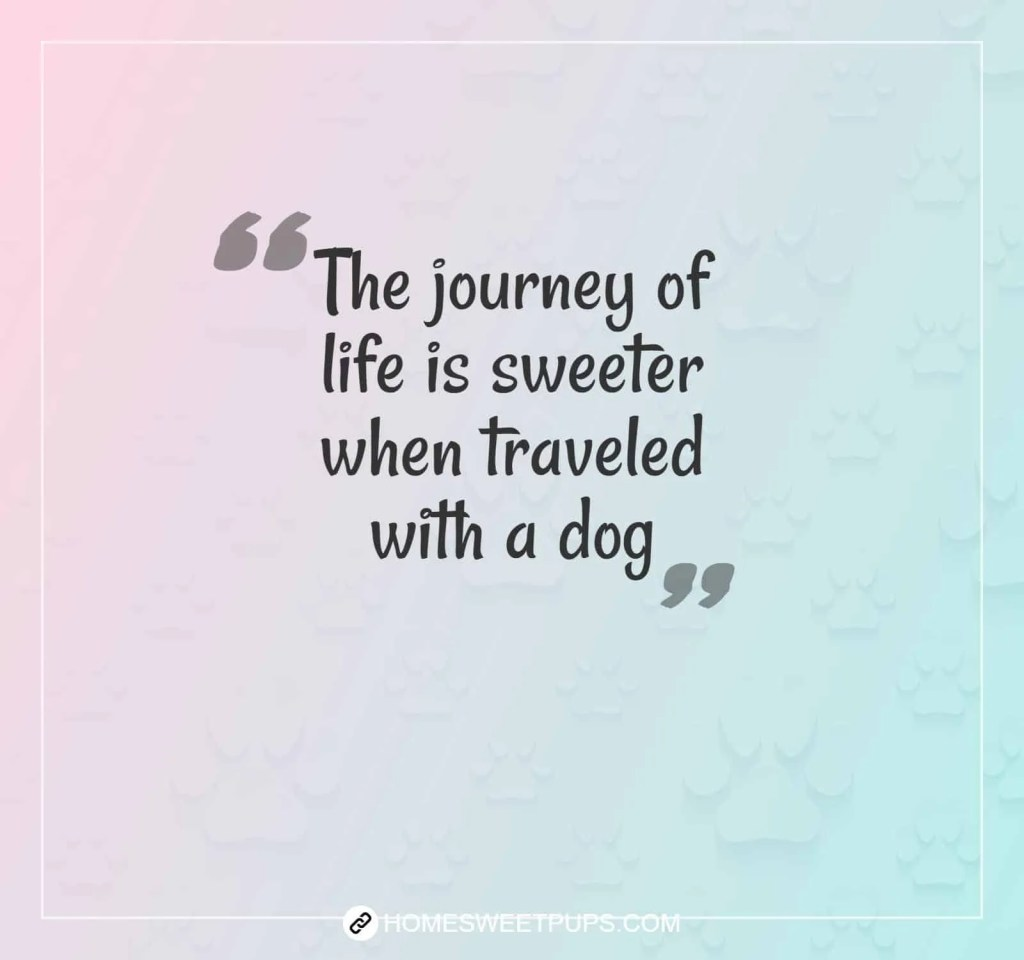 "Quote about dogs loyalty "" the journey of life is sweeter when traveled with a dog"""