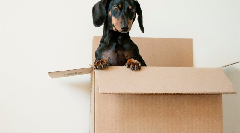 moving day pet