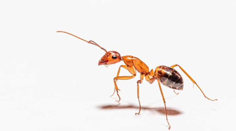 brown ant on white surface