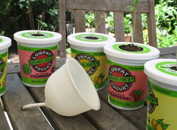 Yoghurt container planters
