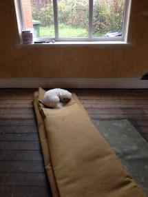 Old pine floorboards under the carpets
