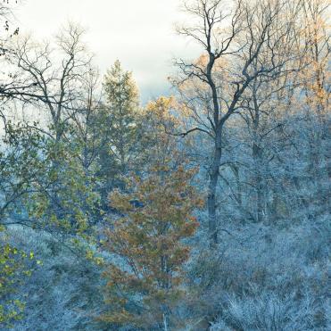 landscape frost