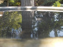 Reflections from a bird bath (sorry for the part at the bottom it's a little blurry)