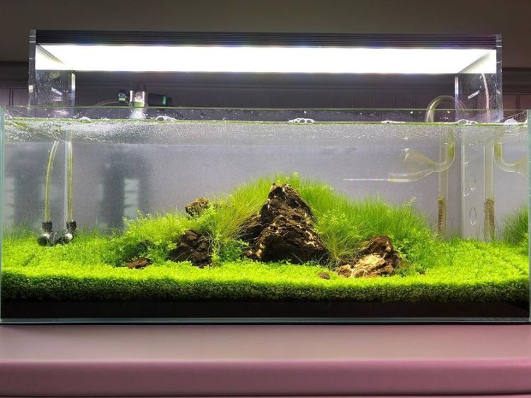 Stunning iwagumi aquascape for home decorations 2 by danny adams (source instagram)