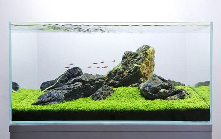 Stunning iwagumi aquascape for home decorations by george farmer (source pinterest.com)