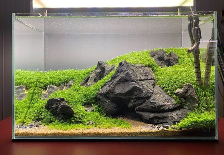 Stunning iwagumi aquascape for home decorations by danny adams (source instagram)