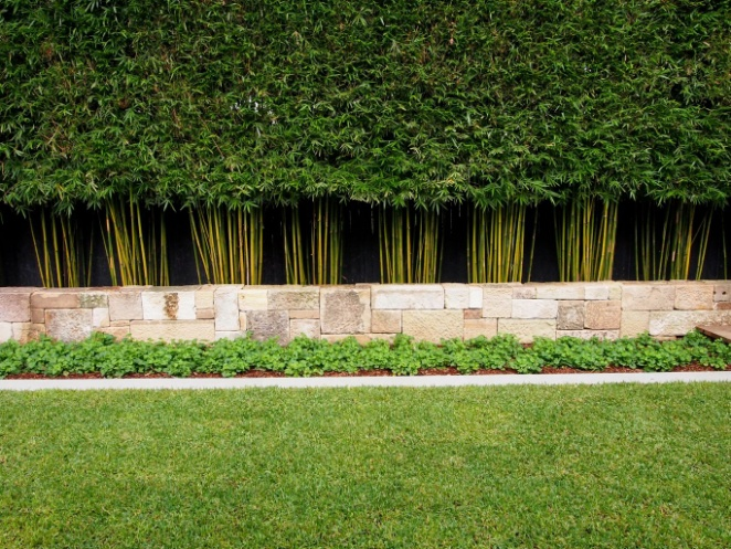 Bambusa textilis 'Gracilis' – Bamboo Plus