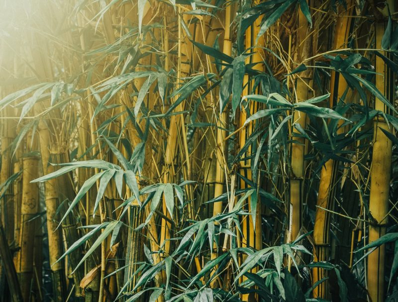 How To Plant Bamboo Trees | The Tree Center™