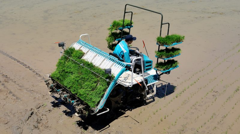 Transplanter | Products | Kubota Agricultural Machinery India.
