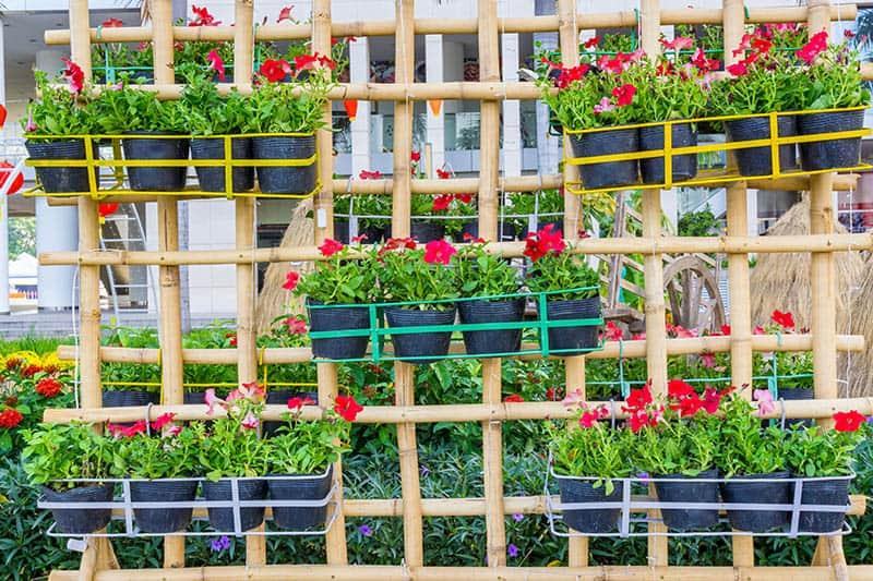 25 Awesome Garden Trellis Ideas | Trees.com