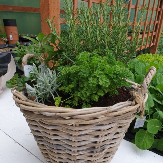 Gift Herb basket ,grow your own