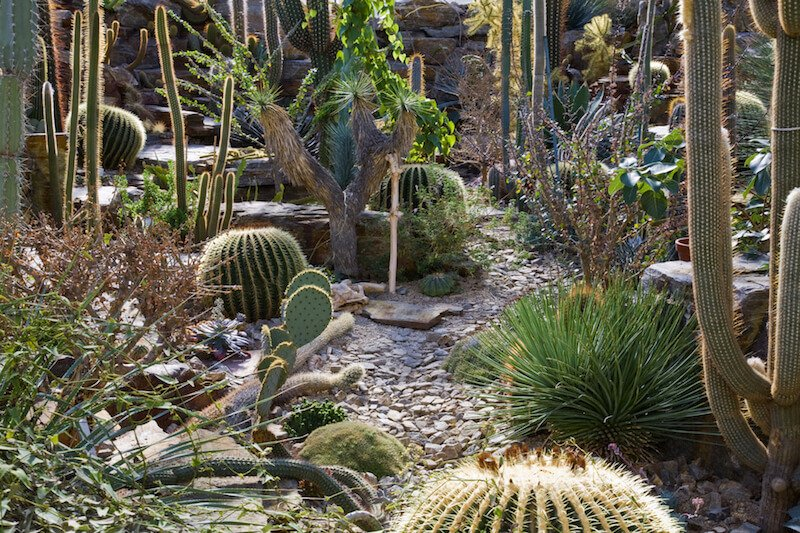 By mixing a number of different kinds of cacti, you can give your garden a wild and natural look. A loose stone path is a way to keep your rugged and natural look, while building a walkway.