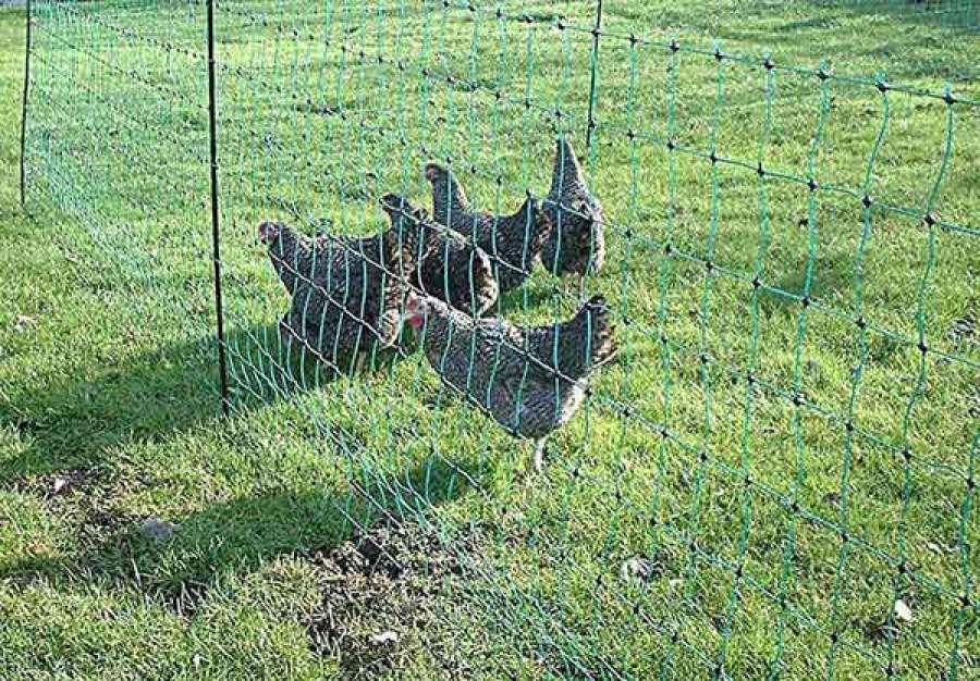 Electric Net Chicken Fence Ideas