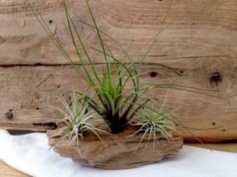 Amazing Air Plants Decor Ideas 06
