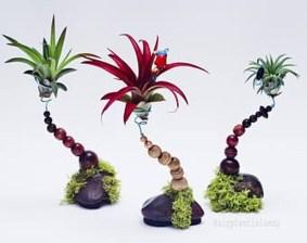Amazing Air Plants Decor Ideas 11