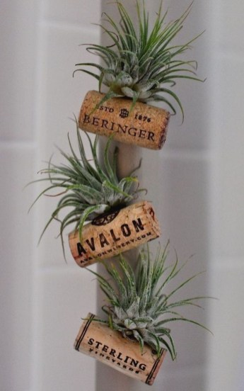 Amazing Air Plants Decor Ideas 13