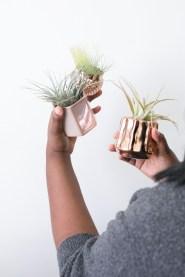 Amazing Air Plants Decor Ideas 19