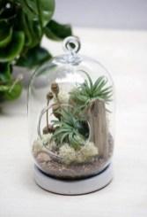 Amazing Air Plants Decor Ideas 28