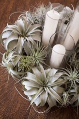 Amazing Air Plants Decor Ideas 29