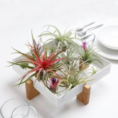 Amazing Air Plants Decor Ideas 35