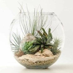 Amazing Air Plants Decor Ideas 39