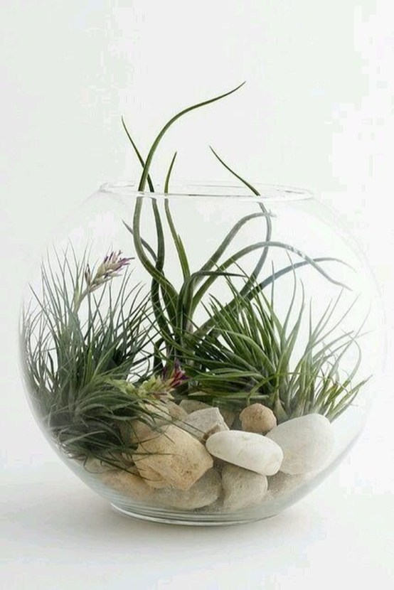 Amazing Air Plants Decor Ideas 40