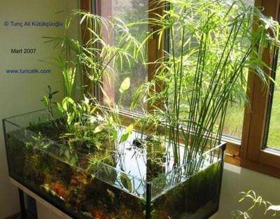 Amazing Aquarium Design Ideas Indoor Decorations 31