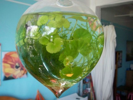 Amazing Aquarium Design Ideas Indoor Decorations 36