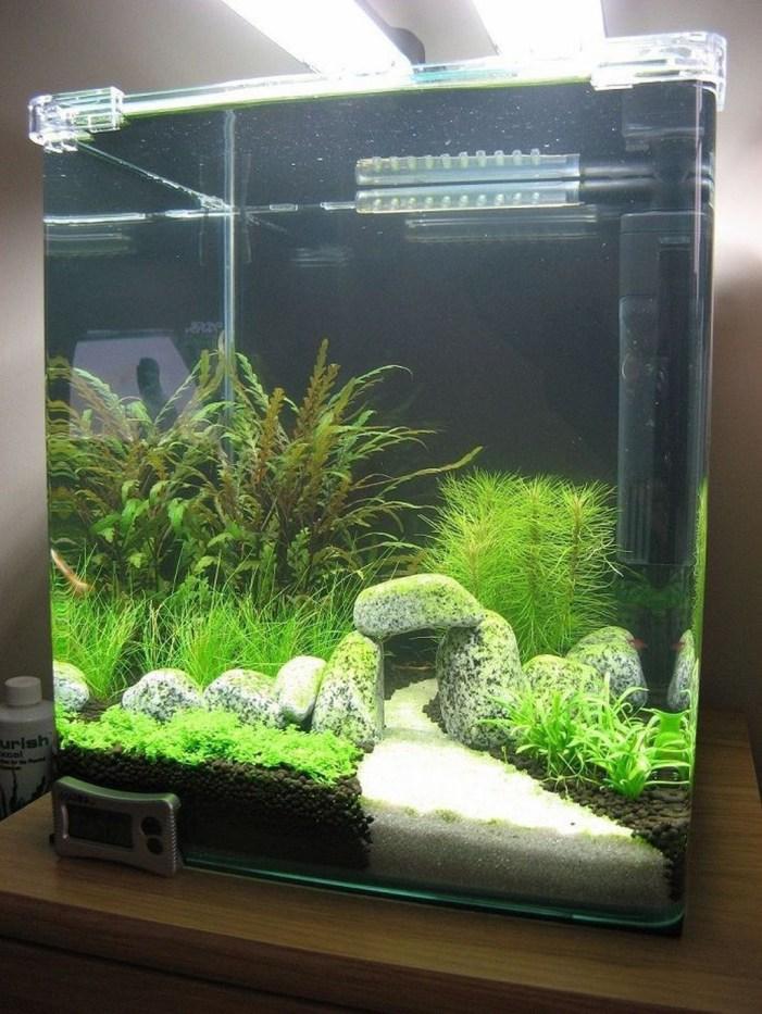 Amazing Aquarium Design Ideas Indoor Decorations 39